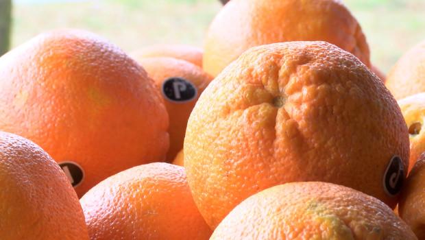 Jak i gdzie przechowywać warzywa i owoce?