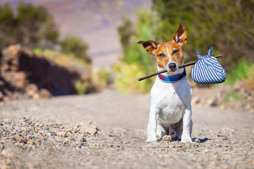 Psia dola w zagranicznej podróży