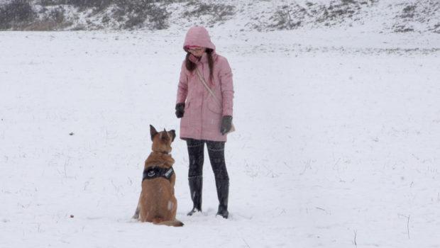 Jak zadbać o psa zimą
