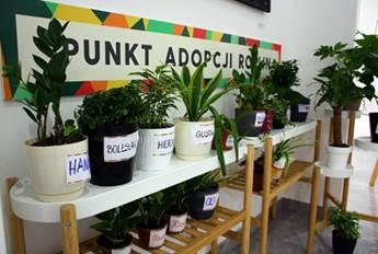 Zaopiekuj się rośliną, a ona zadba o Ciebie!