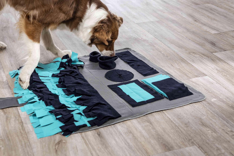 Akcesoria i ubranka dla zwierząt: przydatne rozwiązanie czy modny gadżet?