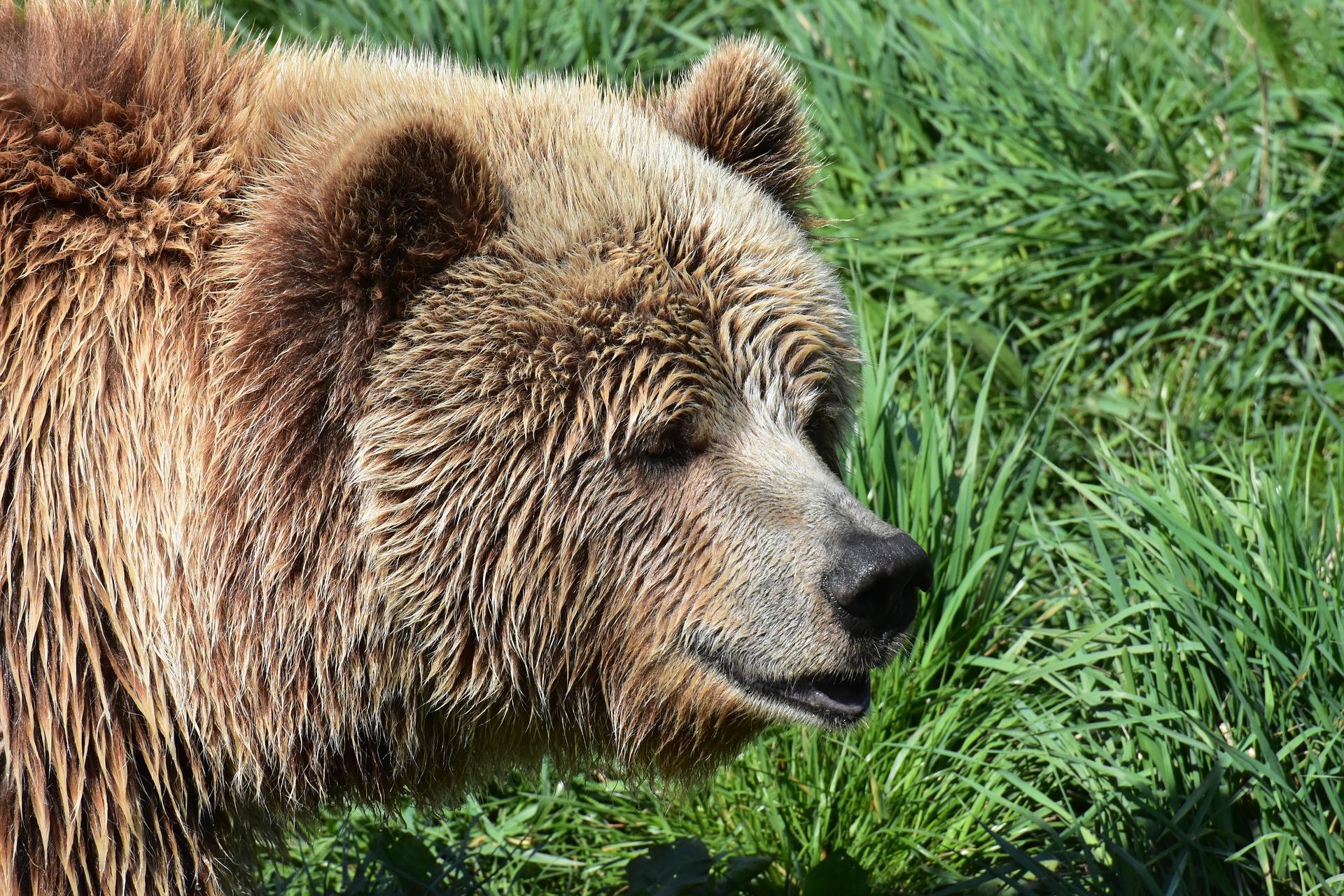 Plastik przeliczalny na niedźwiedzie – razem z Biedronką zadbaj o przyszłość