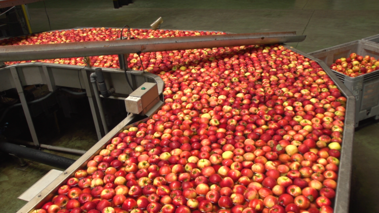 Ile kosztuje przygotowanie jabłka do sprzedaży?