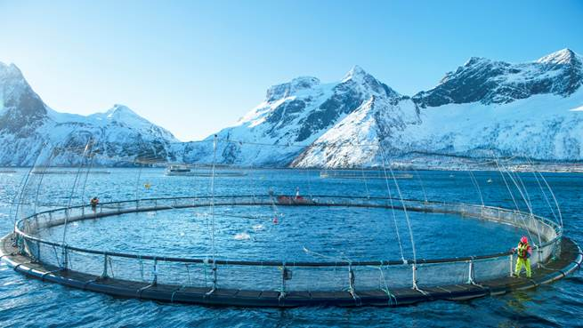 Spadek stosowania antybiotyków w norweskich hodowlach łososia aż o 99%