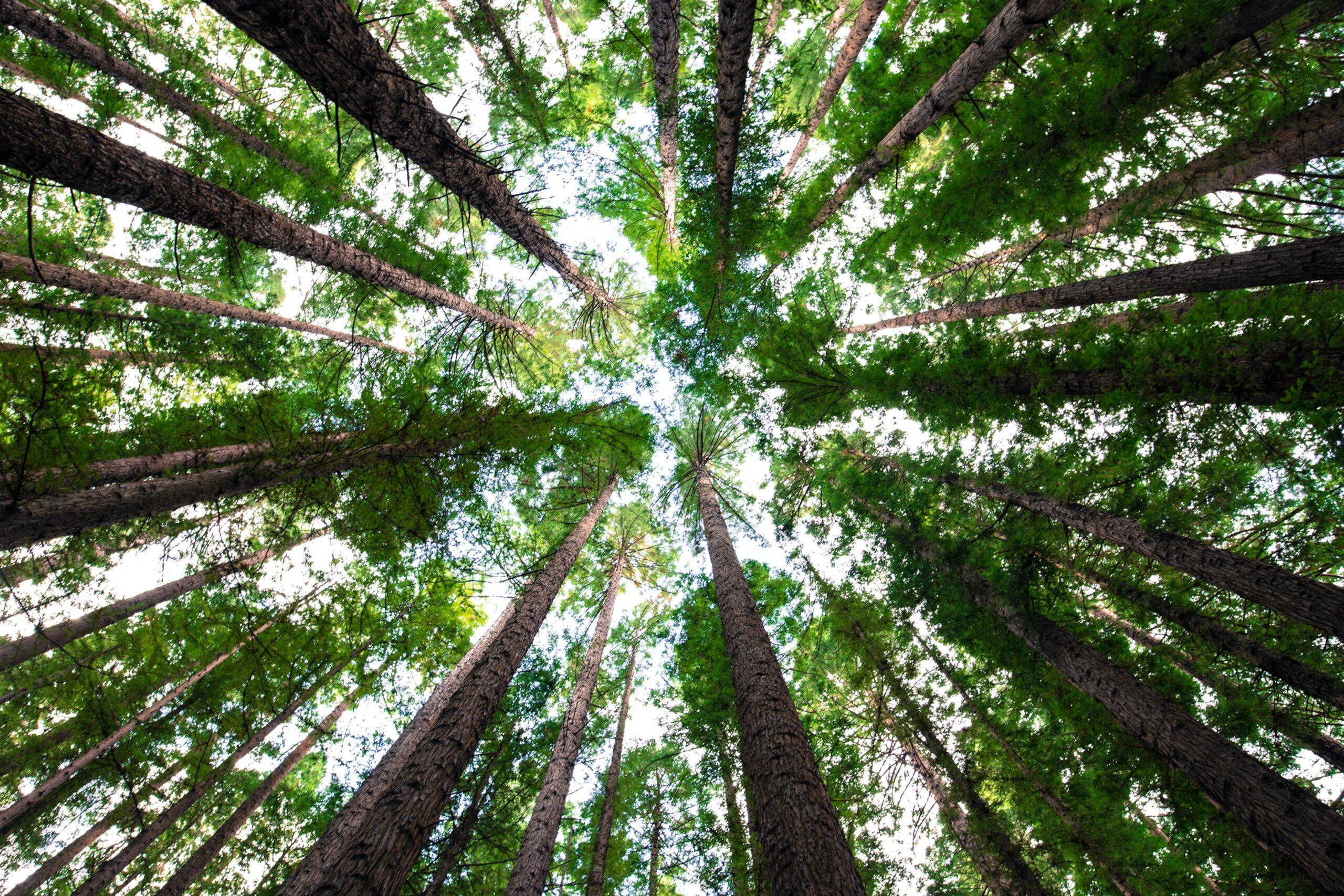 """""""Zadbajmy o dobry klimat"""" – nowe drzewa w Borach Tucholskich!"""
