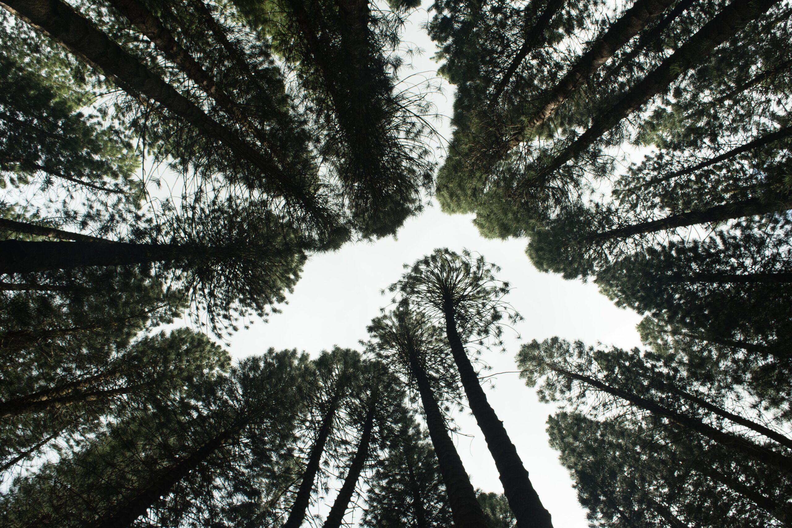 Zrównoważony rozwój wysoko na liście priorytetów przedsiębiorców – niestety tylko w teorii
