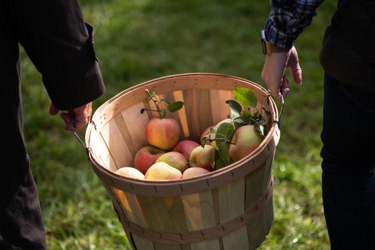 Komu smakują polskie jabłka? – przemyślane strategie eksportowe odpowiedzią na kłopoty polskich sadowników